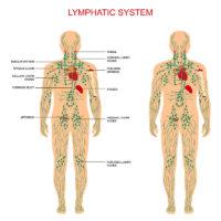 Bambu Clinic lymphatic system