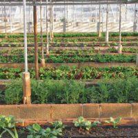 Bambu Clinic organic vs local food