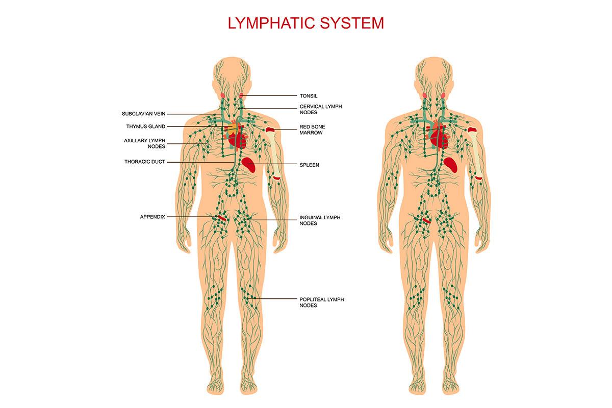Bambú Clinic lymphatic system