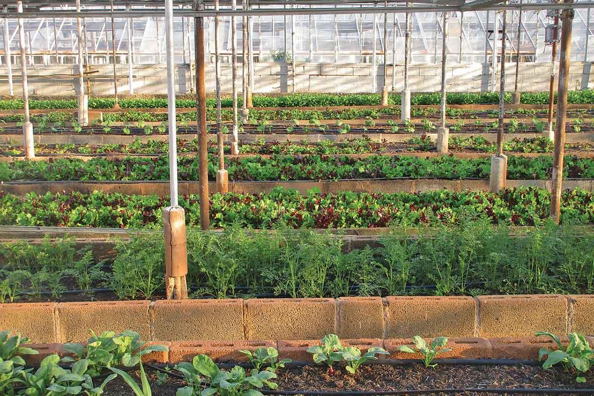 Bambú Clinic organic vs local food